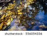 autumn and river water. a view... | Shutterstock . vector #556054336