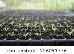 Small  Plant From Seed  In The...