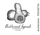 butternut squash hand drawn... | Shutterstock .eps vector #556106716