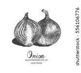 onion hand drawn illustration... | Shutterstock .eps vector #556106776
