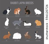 rabbit  lapin breed icon set.... | Shutterstock .eps vector #556120726