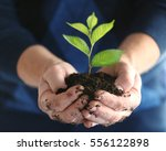 senior man holding young tree...   Shutterstock . vector #556122898