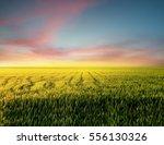 field during sunset....   Shutterstock . vector #556130326