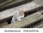 Squirrel Emerging From Pile Of...