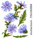 watercolor flower set  hand... | Shutterstock . vector #556180888