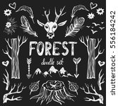 forest doodle set . hand drawn... | Shutterstock .eps vector #556184242