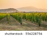 grape harvest | Shutterstock . vector #556228756