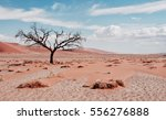 Desert Tree - stock photo