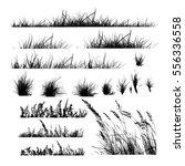 set grass. vector | Shutterstock .eps vector #556336558