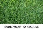 green grass background texture | Shutterstock . vector #556350856