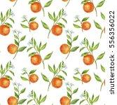 seamless pattern with orange... | Shutterstock . vector #556356022