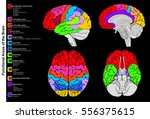 human brain functional... | Shutterstock .eps vector #556375615