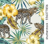 leopards with palm leaves and... | Shutterstock .eps vector #556377856