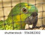 Wild Bird In Cage