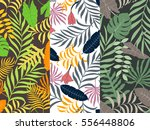 set of three seamless pattern... | Shutterstock .eps vector #556448806