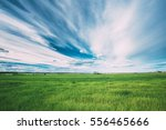 green field in spring season.... | Shutterstock . vector #556465666
