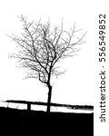 realistic tree silhouette ... | Shutterstock .eps vector #556549852