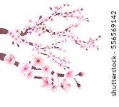 realistic sakura japan cherry... | Shutterstock .eps vector #556569142