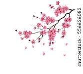 japanese sakura. the branch of... | Shutterstock .eps vector #556626082
