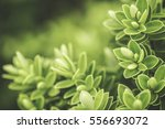 stylised macro shot of a... | Shutterstock . vector #556693072