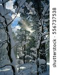 into the winter | Shutterstock . vector #556737538