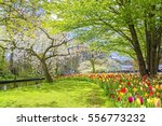 beautiful spring landscape with ...   Shutterstock . vector #556773232