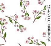 seamless pattern with cherry... | Shutterstock . vector #556779412