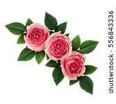 Stock photo pink rose flowers corner arrangement isolated on white 556843336