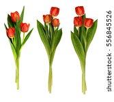 set of red tulip flowers... | Shutterstock . vector #556845526