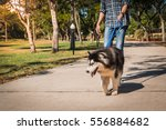 Stock photo blind man is led by his guide dog although the dogs can be trained to navigate various obstacles 556884682