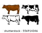 cow in brown color  silhouette  ... | Shutterstock .eps vector #556914346