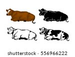 lying cow in brown color ... | Shutterstock .eps vector #556966222