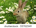 cute rabbit in grass | Shutterstock . vector #55702549