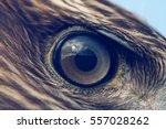 eagle eye close up  macro photo ... | Shutterstock . vector #557028262