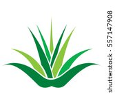aloe vera plant green icon ... | Shutterstock .eps vector #557147908