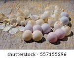 Eggs Of Gecko On Cement Wall...