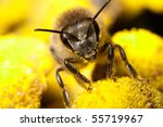 The Bee With The Pollen On Its...