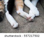 cat paws of tri color cat | Shutterstock . vector #557217502