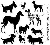 set of of dogs silhouettes  ... | Shutterstock .eps vector #557232748