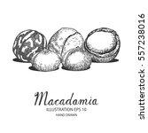macadamia hand drawn...   Shutterstock .eps vector #557238016