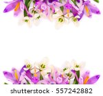 Bouquet Of Violet Crocuses And...