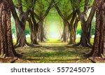 magic  forest green   Shutterstock . vector #557245075