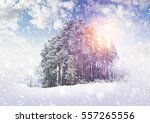 winter landscape with trees and ...   Shutterstock . vector #557265556