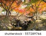 water path autumn kyoto  japan | Shutterstock . vector #557289766