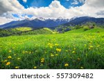 Magical Spring Landscape With...