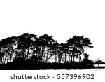 realistic silhouettes of pines  ... | Shutterstock .eps vector #557396902