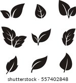 black leaf icon on white... | Shutterstock .eps vector #557402848