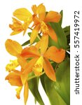 Small photo of a macro closeup of a bright and vivid orange yellow cattleya laelia orchid species plant isolated on white.