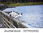 Six Seagulls Sitting On Metal...