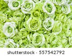Stock photo background of many green roses 557542792